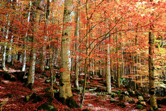 beautiful colors in the autumn forest