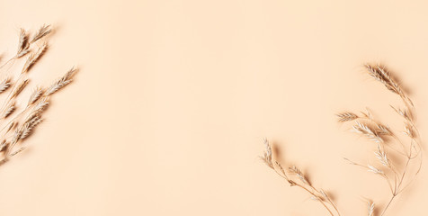 Dry flower branch on a soft beige background, flat lay, copy space. Minimal neutral flower background, top view.