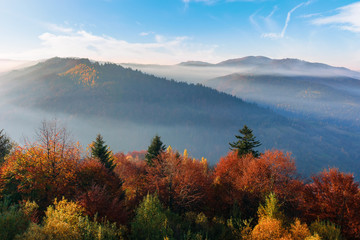 misty sunrise in carpathian mountains. amazing nature scenery in fall season. trees in red and orange foliage. distant ridge in hazy atmosphere beneath a blue sky