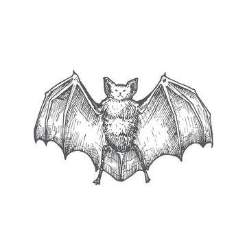 Hand Drawn Halloween Scary Vampire Vector Illustration. Abstract Bat with Wings Sketch. Engraving Style Drawing.
