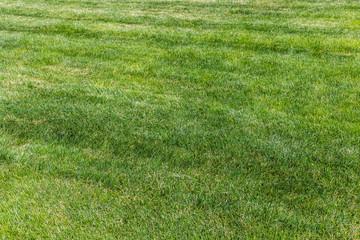 beautiful background of green grass