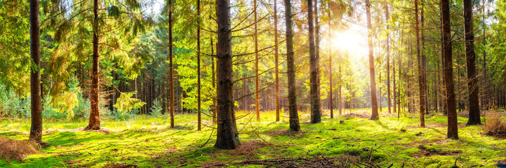 Beautiful, green forest with moss-covered soil and bright sun shining through the trees