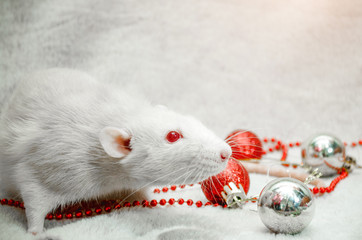 White albino rat on fur background with New Year silverand red balls, beads, symbol of the year 2020, with copyspace