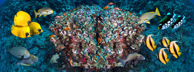 In de dag Koraalriffen Underwater coral reef landscape in the deep blue ocean with colorful fish and marine life wide format panorama.