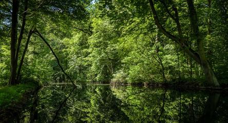 Verwunschene Parklandschaft: Bäume spiegeln sich im Teich des sonnendurchfluteten Schlossparks Berlin-Buch