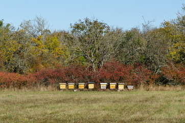 Yellow beehives in a forest glade