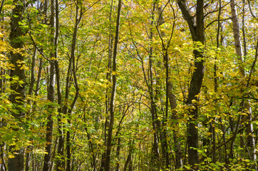 Fall season colors in a deciduous forest