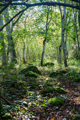 Bright deciduous forest with mossy rocks on the ground