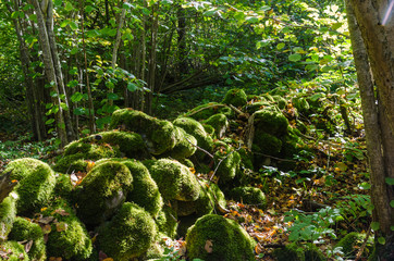 Moss covered old dry stone wall in a green forest