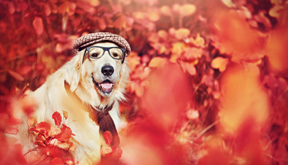 Wide banner with a dog wearing glasses, hat and scarf in the autumn forest