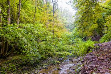 Wildromantisches Brohlbachtal in der Südeifel bei Treis-Karden