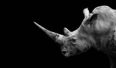 Foto op Aluminium Neushoorn Rhino on the black background
