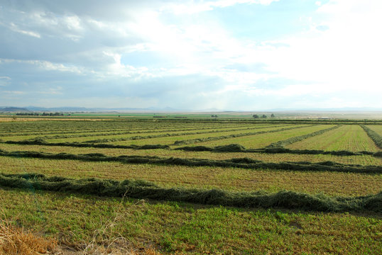 Fields of cut hay reaching into the horizon