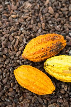 Cacao pods over cacao beans.