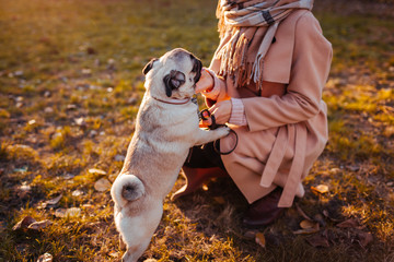 Pug dog. Girl walking pug dog in autumn park. Happy pet jumping on woman's legs. Dog playing