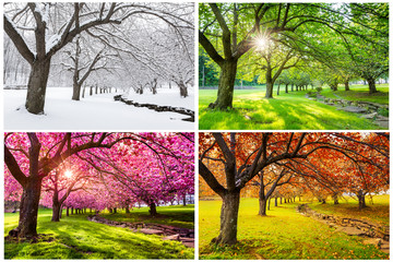 Spoed Foto op Canvas Herfst Four seasons with japanese cherry trees in Hurd Park, Dover, New Jersey