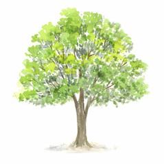 木 水彩イラスト