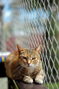 Cat safety net window