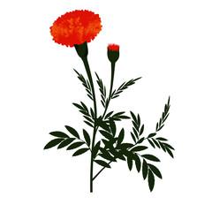 Orange Marigold Flower with Plant - Vector Image