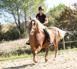 riding girl and comtois horse