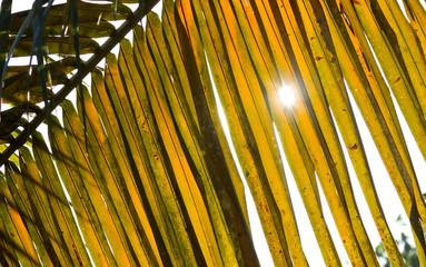 Sun shines through palm leafs