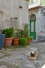 Canvas Prints Narrow alley Province of Caserta, Italy, 06/30/2018. Tourist trip to a small village in the Campania region.