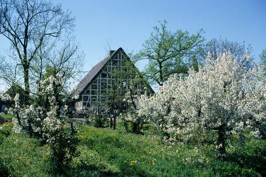 |Historic thatched half-timbered house, Altländer farmhouse, Jork, Altes Land, Lower Saxony, German , Europe