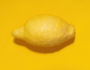 Whole lemon fruit on yellow background. Modern yellow minimalist.