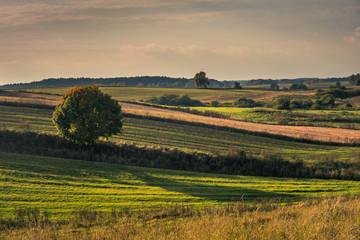 Masurian meadows at autumn near Banie Mazurskie, Masuria, Poland