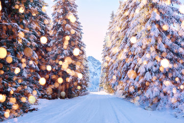 Christmas forest in mountains