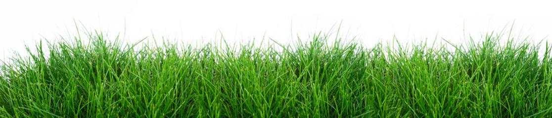 Fototapeta grass isolated on a white background obraz