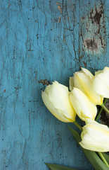 White tulips on blue background with frame, flower postcard for Women's Day, Mother's Day or sale concept. Floral spring background with copy space.
