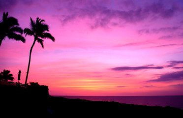 Tropical Palm Trees Sunset