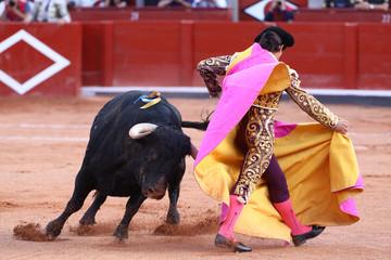 Toro y torero en la plaza