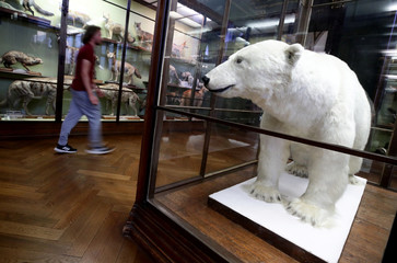 A visitor walks next to a taxidermied polar bear at the Natural History Museum in Vienna