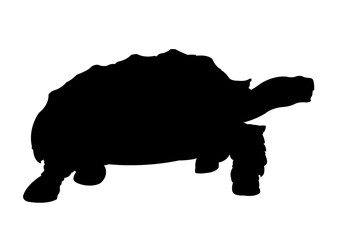 Turtle Silhouette vector illustration isolated