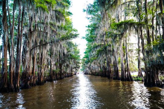 Tunnel of trees through a bayou at Caddo Lake near Uncertain, Texas