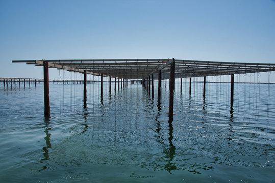 Fermes conchylicoles au bord de la lagune de Thau