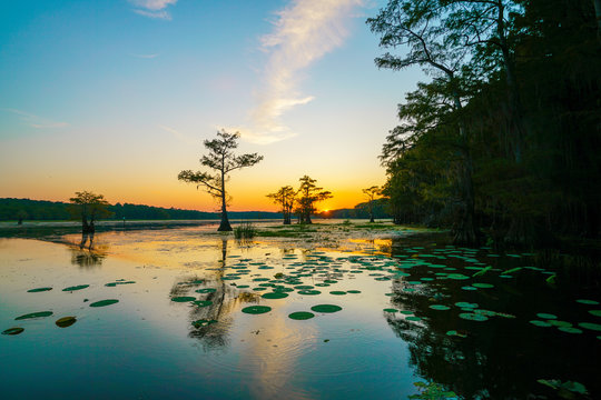 Sunset view with bald cypress trees and lily pads at Caddo Lake near Uncertain, Texas