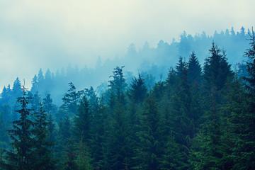 Wall Mural - Misty mountain landscape
