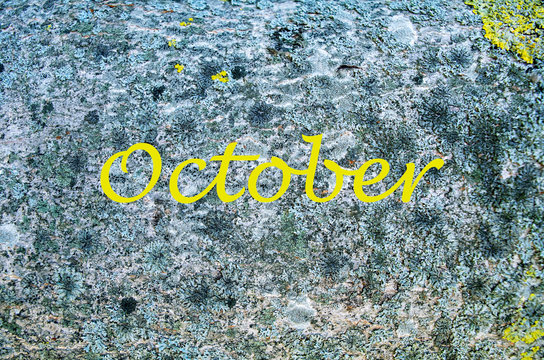 Grey stone with yellow and black moss, background. Yellow lichen on a tree. Yellow october word