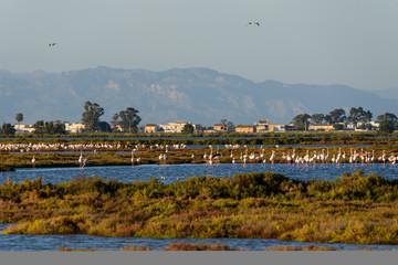 Flamingos at sunset, Delta del Ebro, Spain