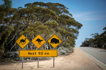 Shallow depth of field view of Iconic sign advising drivers of the possibility of camels, kangaroos and wombats as traffic hazards on the Eyre Highway (Nullarbor Plain)