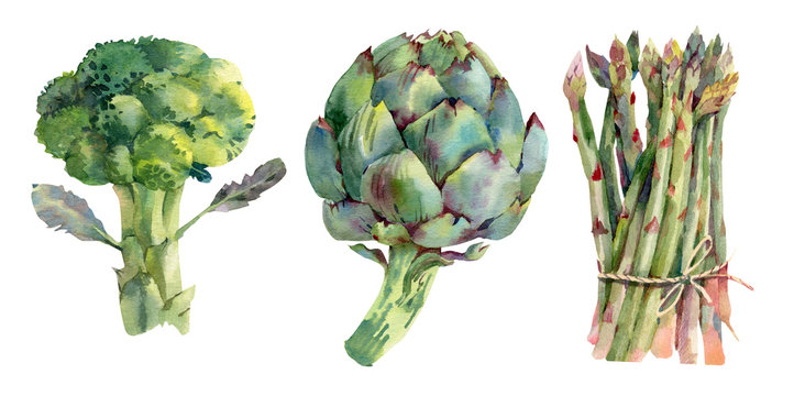 Green asparagus, artichoke and broccoli. Hand drawn watercolor botanical illustration. Isolated on white background