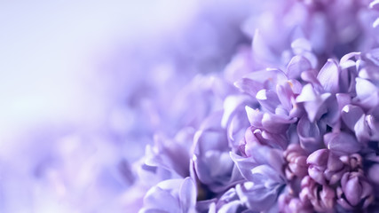 Papiers peints Lilac lilac flowers macro. blurred background with lilac delicate flowers. floral background with branches of flowering lilac.