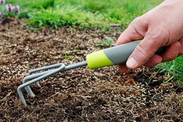 Man rakes the seeds of grass in fresh soil.