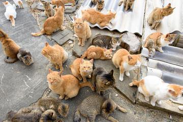 写真素材:猫、複数、たくさん、猫島、青島、愛媛県、日本