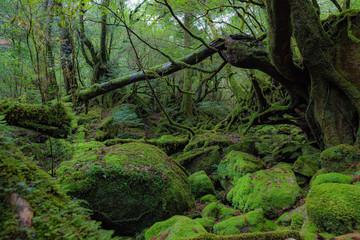 鹿児島県・屋久島の森 1