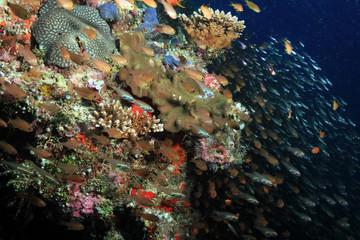 Schools of Fish over Coral Reef. South Ari Atoll, Maldives