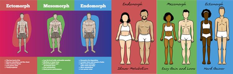 Men & women body types diagram with three somatotypes
